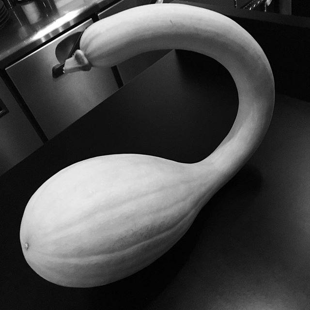 pumpkin  trumpet #恵比寿 #ebisu #french #restaurant #ici#変わった野菜#legume